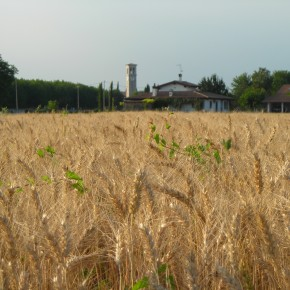 Frumento e campanile
