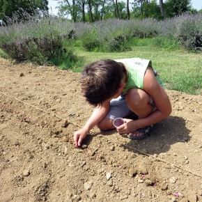 Semina delle zucche