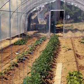 L'orto e la stagionalità di frutta e verdura